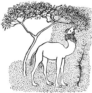 от чего у верблюда горб картинки раскраски влияние может